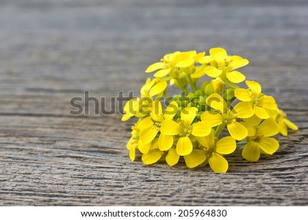 Yellow wild flowers on old wooden background - stock photo