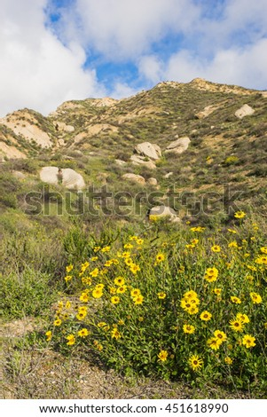 Yellow wildflower grows on the side of mountain in southern California near Los Angeles. - stock photo
