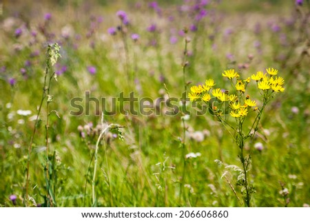 Yellow wildflowers on a pink flower background with boke - stock photo