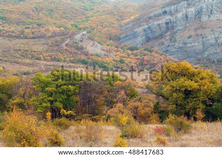 Yellowed dry grass and trees in the mountains.