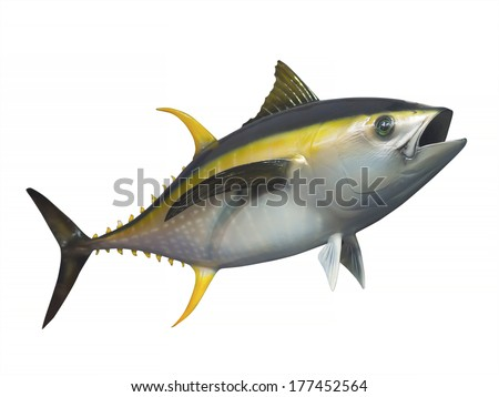 Yellowfin tuna in fast motion, isolated - stock photo
