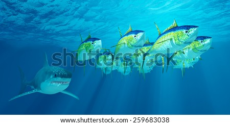 Yellowfin Tuna School - A school of Yellowfin tuna is followed by a Great White shark waiting for his opportunity to strike. - stock photo