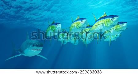Yellowfin Tuna Stock I...