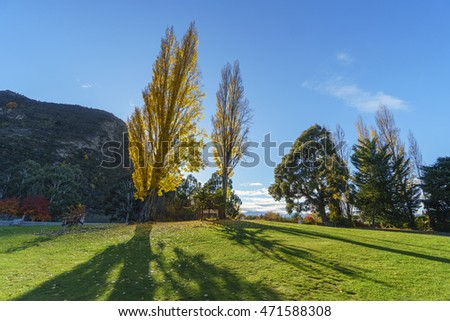 Yellowish colorful trees against blue sky in autumn, Wanaka, South Island, New Zealand.