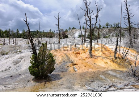 Yellowstone landscape with dead trees - stock photo