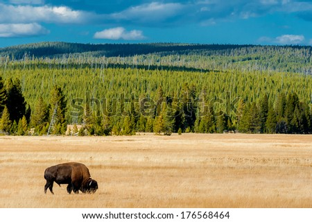 Yellowstone National Park in Wyoming is one of my favorite parks you can find in that area. The animals, the landscape, the geysers. I could spend days there shooting if I would have had the time. - stock photo