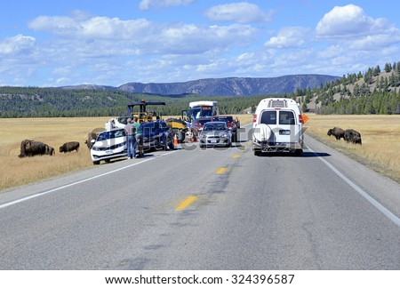 YELLOWSTONE NATIONAL PARK, WYOMING - CIRCA SEPTEMBER 2015. â??Bison Jamsâ?� result when visitors stop and gape at Bison crossing the road which cause traffic backups, often involving dozens of vehicles.