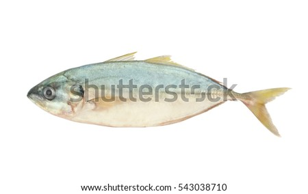 Yellowtail scad isolated on white, Atule mate