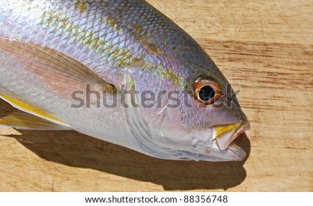 Yellowtail Snapper (Ocyurus chrysurus) on a cutting board ready to be filleted. - stock photo