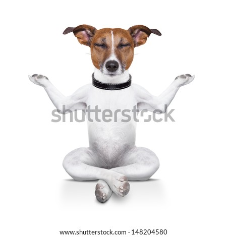 yoga dog sitting relaxed with closed eyes - stock photo