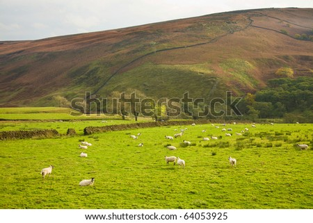 Yorkshire dales; national park in the UK; aumumn; - stock photo