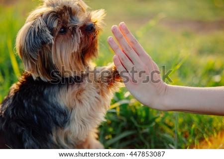 Dog Training Stock Images Royalty Free Images Amp Vectors