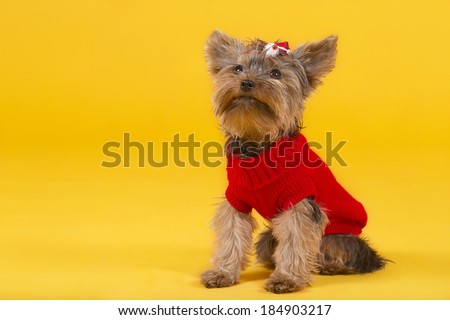 Dog Accessories Stock Photos, Royalty-Free Images ...