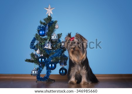Yorkshire terrier puppy sits near a Christmas tree - stock photo