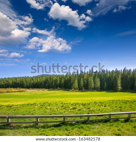 Yosemite green meadows and forest on a sunny spring in California USA - stock photo