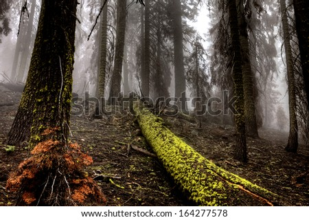 Yosemite National Park lush forest logs and greenery - stock photo