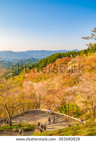 YOSHINO, JAPAN - APRIL 13: Cherry blossoms at Mt. Yoshino on April 13, 2013 in Yoshino, Japan. It was designated as part of a UNESCO World Heritage Site.