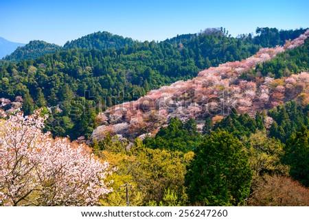 Yoshinoyama, Nara, Japan landscape in the spring. - stock photo