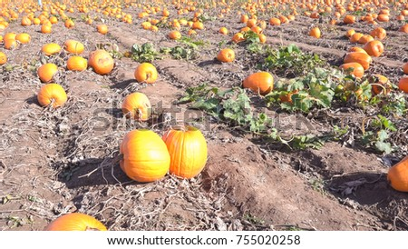 You pick large pumpkin patch early in the season.