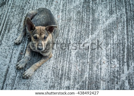 Young abandoned dog