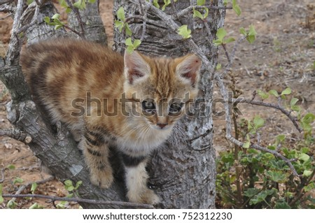 Young African Wild Cat