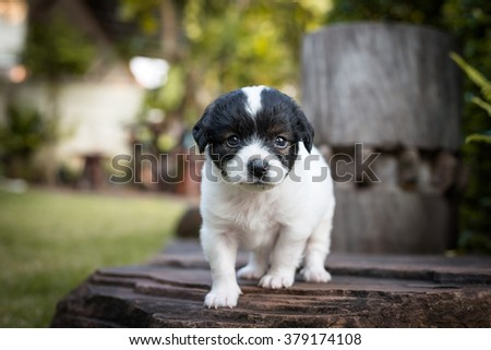 young and nice puppy dog looking into the camera in nature background - stock photo