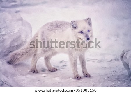 Young Arctic fox with fur coat changing to winter color.photo art - stock photo