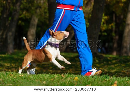 Young attractive sport girl jogging with dog in sunny autumn park - stock photo