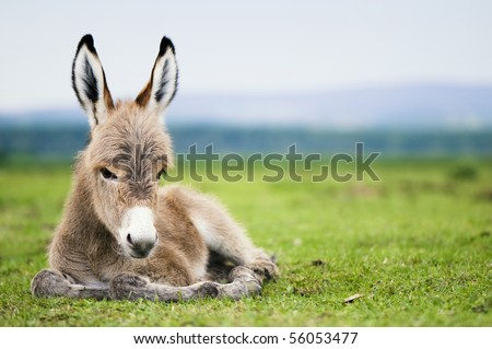 young baby donkey - stock photo