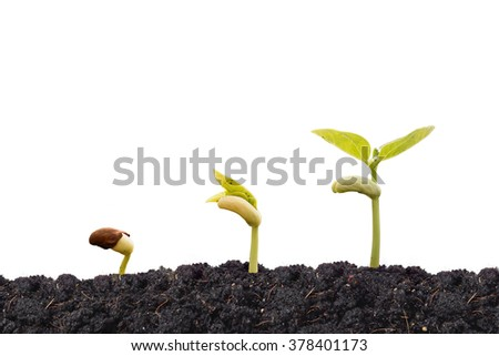 young baby plants growing in germination sequence on fertile soil with isolated background