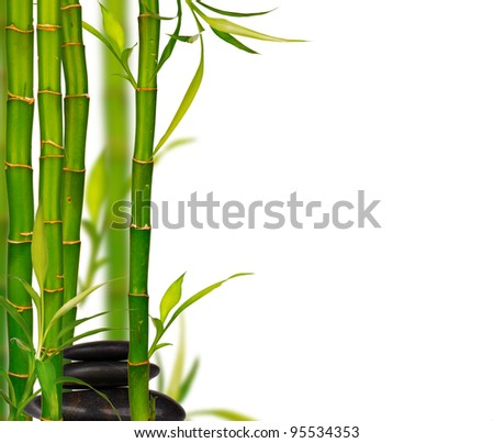 Young bamboo sprouts background, isolated on white background