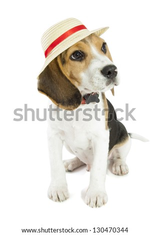 Young beagle with straw hat isolated over white - stock photo