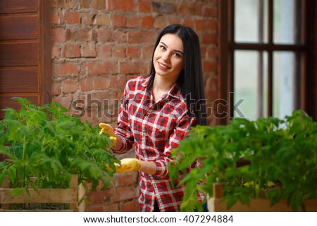 Young beautiful brunette woman in a plaid shirt takes care of tomato seedlings. Crate with seedlings - stock photo