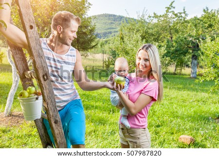 Young beautiful family picking apples from an apple tree