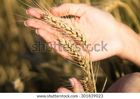 young beautiful girl in the field with ears in the hand