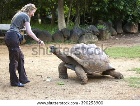 young beautiful tourist woman feeds a turtle - stock photo