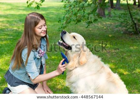 Young beautiful woman combing fur golden retriever dog on a green lawn. - stock photo
