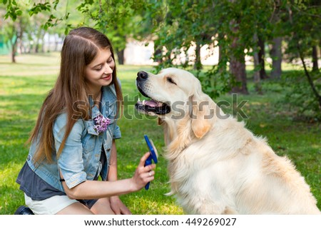 Young beautiful woman combing fur golden retriever dog on a green lawn