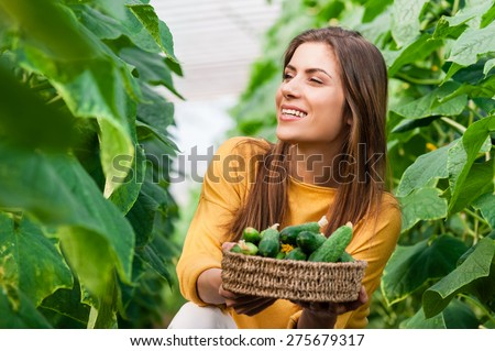 Young beautiful woman in a greenhouse harvesting cucumbers and holding a basket