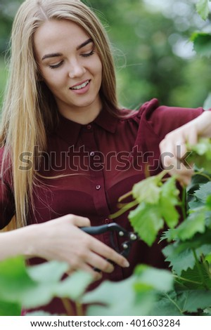 Young beautiful woman with pruner in yard gardening cuts grapes - stock photo