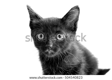 young black cat