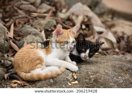 Young black cat holding yellow cat in nature. - stock photo