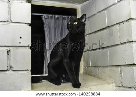 Young black cat on a window, Bombay breed - stock photo