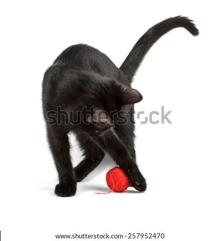 young black cat plays with the red ball - stock photo