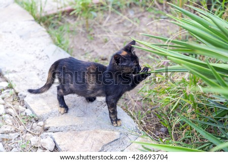Young black kitten playing with plant leaves - stock photo
