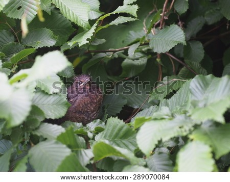 young blackbird on forest background - stock photo
