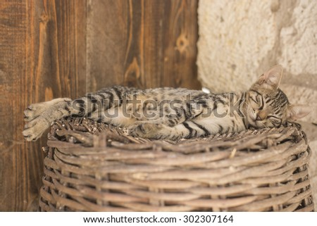 Young brown cat lyingand sleeping on the wicker basket - stock photo