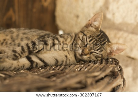 Young brown cat lyingand sleeping on the wicker basket