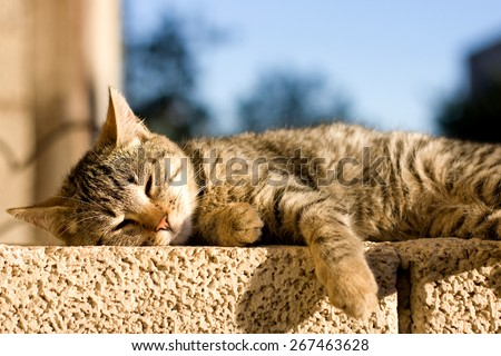 Young brown tabby cat lying on the wall, sunbathing and trying to sleep. Selective focus.  - stock photo