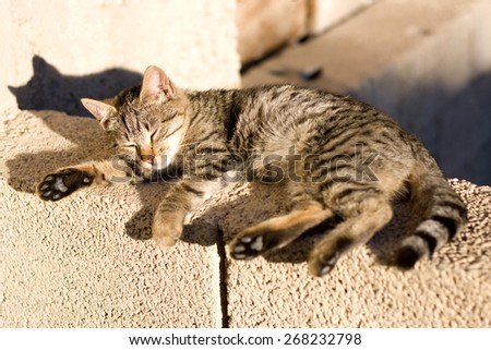 Young brown tabby cat sleeping on the wall outside, enjoying the sun. Selective focus.  - stock photo